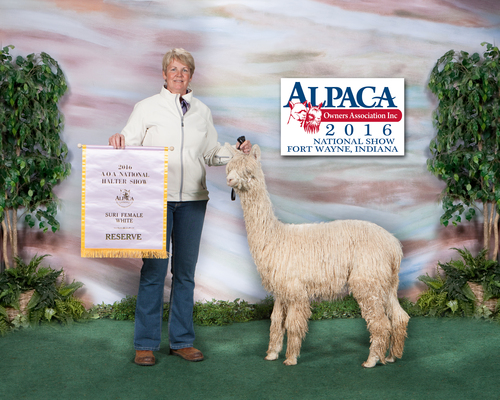 SieFyre - Reserve National Champ at 10 Months - SOLD