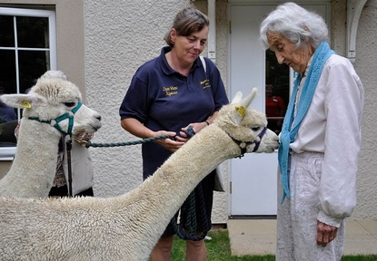 Peruvian scarf made from alpaca wool attracts distant furry cousin to care home