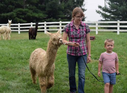 Walk an alpaca!