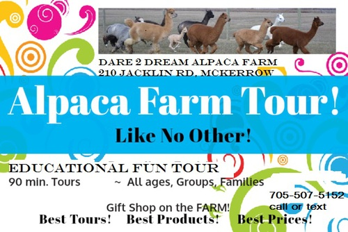 Come meet our alpacas