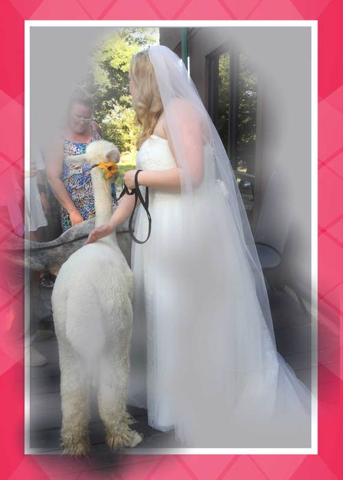 Phoebe and the Bride
