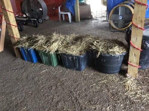 Tubs of winter straw bedding ready to be hauled away....