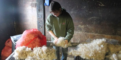 Shearing a sure sign of spring