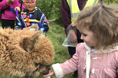 CITY BUZZ: Trekking with Alpacas at Holly Hagg Community Farm...