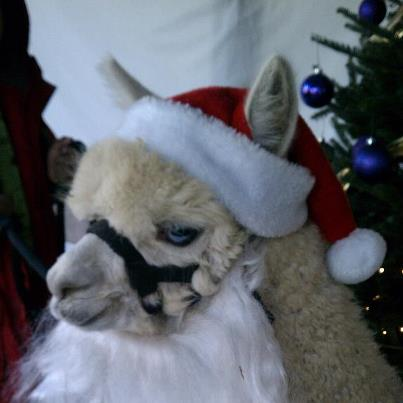 Holiday Extravaganza, December 9th & 10th