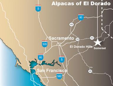 Alpacas of El Dorado is located about 50 miles east of Sacramento, CA