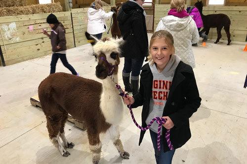 Howard Co. 4-H launches alpaca, llama project