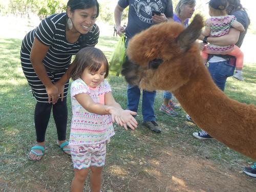 Fun Children Activities with Arapaho Rose Alpacas