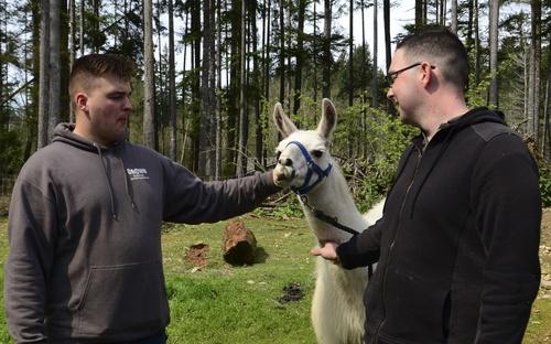 Nimitz Sailors Help Llamas In Need