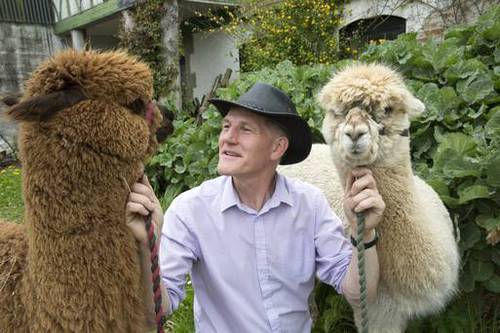 'Alpaca fleeces are 16 times more valuable than sheep's wool': Alpaca Joe brings the Andes to Irelan