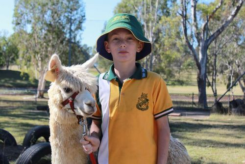Alpaca therapy at Queensland high school tackles special students' anxiety