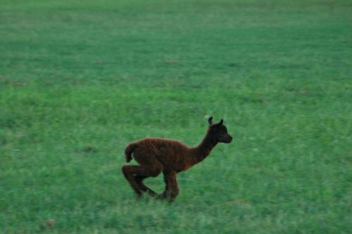 I can run!