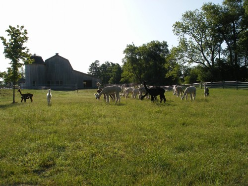 Yakzz Yak farm located in Tully New York owned by Suzanne and