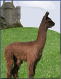 Castle Heights Alpacas - Logo