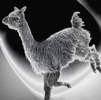 Barron Hill Alpacas - Logo
