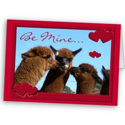 Photo of Alpaca Valentine Card