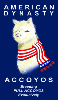 American Dynasty Accoyos, LLC - Logo