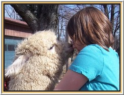 Alpacas + Kids = LOVE!