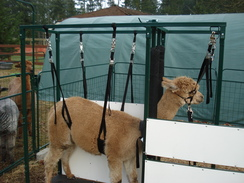 Photo of Deluxe Alpaca Chute