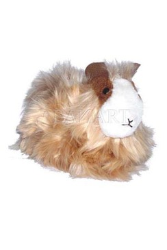 Photo of Guinea Pig Doll