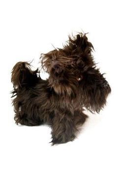 Photo of Terrier Doll