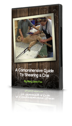 Photo of COMPREHENSIVE GUIDE TO SHEARING CRIA-DVD