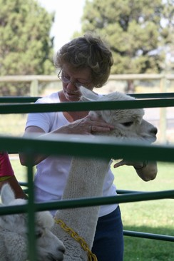 Photo of Alpaca Herd Management Training