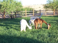Photo of Alpaca Farm Design - Let Us Help You!