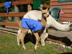Photo of Cria Blankets