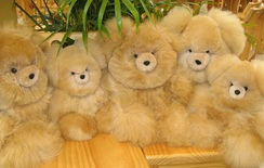 Photo of Teddy Bears