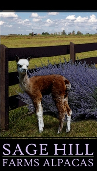 Sage Hill Farms Alpacas - Logo