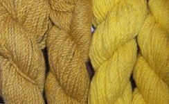 Photo of Alpacas from MaRS Yellow hand-dyed yarn