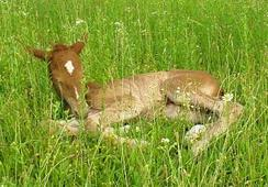 Beauty as a foal 2009