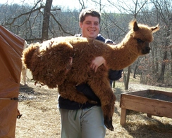 Photo of Alpaca Boarding
