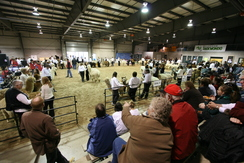 Alpaca Ontario hosts a show every spring