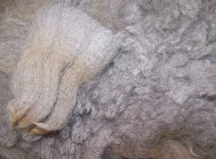 Photo of RAW fiber: all colors and grades