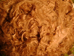 Photo of Raw Suri fiber