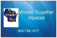 Workin Together Alpacas - Logo