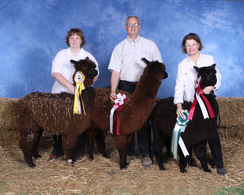 Come seee us at one of the Alpaca Shows we attend.