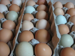 Our Farm Fresh Eggs