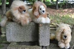 Photo of Stuffed Animals - Lion