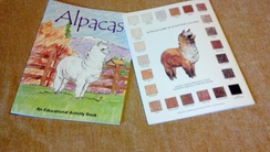 Photo of Alpaca Educational Activity Book