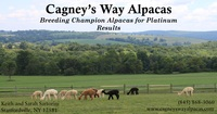 Cagneys Way Alpacas LLC - Logo