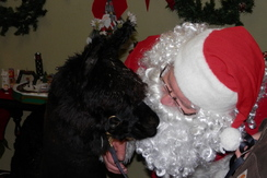 Max meets Santa
