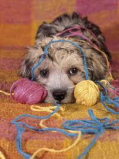 Photo of Open Knitting or Crocheting Studio
