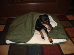 Photo of Alpaca Stuffed Pet Bed w/built in Cover