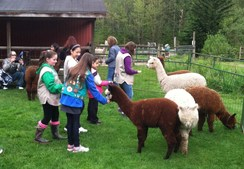 Photo of Fun with Alpacas and Felt!