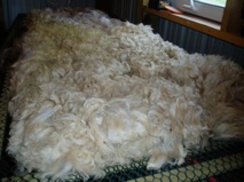 Photo of Raw Fiber - 100% Alpaca Fiber