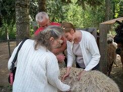 Jackie checking out a cria's fleece.