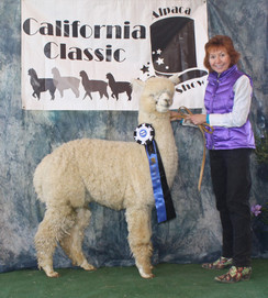 Hawkeye's first cria, Mohican